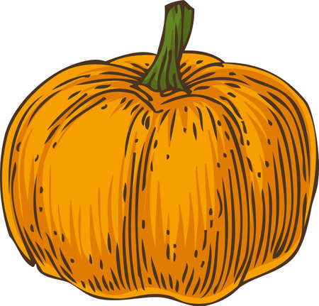 Ripe Orange Pumpkin isolated on a White Background Illustration