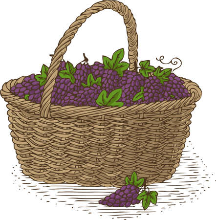 bast basket: Wicker Basket with Ripe Grape. Isolated on a White Background