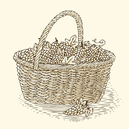 bast basket: Engraving Wicker Basket with Ripe Grape. Isolated on a Beige Background Illustration