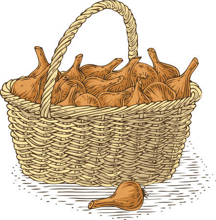bast basket: Wicker Basket with Bulb Onion. Isolated on a White Background