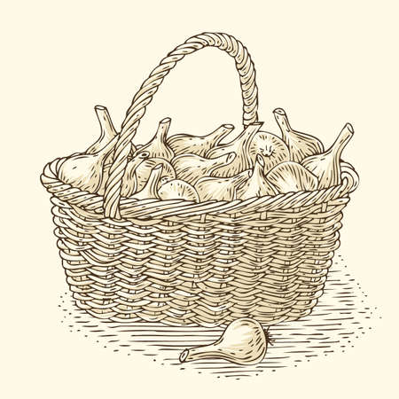 bast basket: Engraving Wicker Basket with Bulb Onion. Isolated on a Beige Background