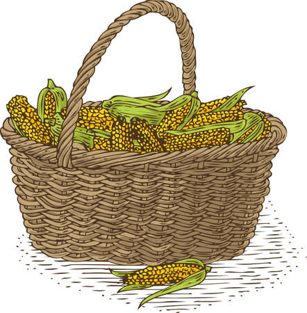 bast basket: Wicker Basket with Ripe Yellow Corn. Isolated on a White Background Illustration