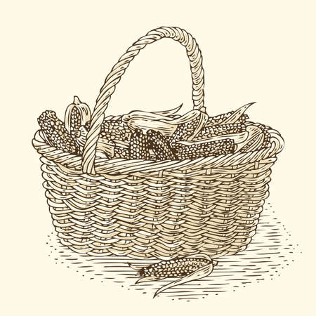 bast basket: Engraving Wicker Basket with Ripe Yellow Corn. Isolated on a Beige Background Illustration