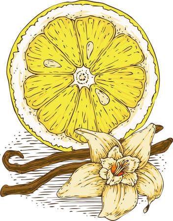 ripe: Ripe Yellow Lemon Slice and Vanilla Flower Illustration
