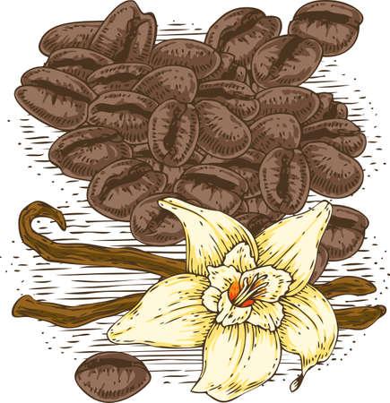 vainilla flor: Flor de vainilla con dos palos y granos de café Vectores