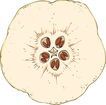 Ripe Quince in Cross Section