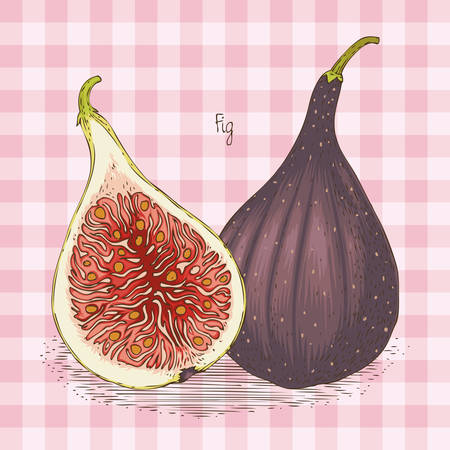 Two Ripe Figs in Cross Section and Whole Isolated on a Pink Plaid Background Vectores