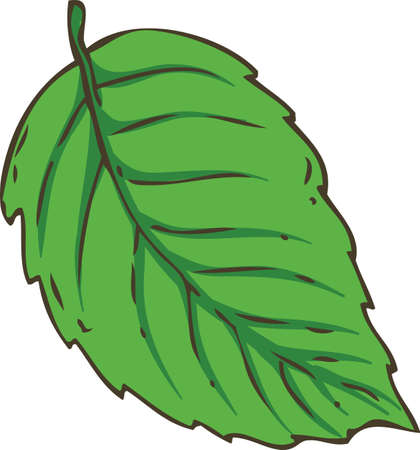 Fresh Green Mint Leaf. Hand Drawn Illustration. Isolated on a White background. Ilustrace