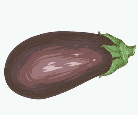 Fresh aubergine or eggplant illustration on white background. 일러스트