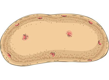 Brown Potato Tuber Illustration