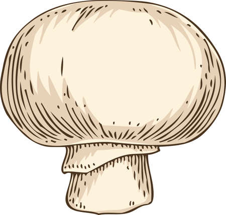Whole Champignon Mushroom. Hand drawn Illustration. Isolated Object