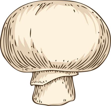 Sensational 940 Sliced Mushroom Stock Vector Illustration And Royalty Download Free Architecture Designs Estepponolmadebymaigaardcom