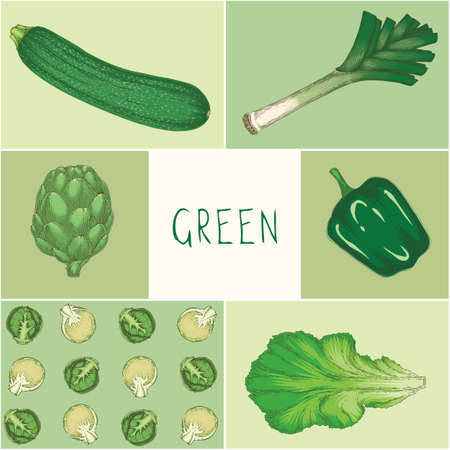 Education Game of Green Color Vegetables on Square Card Hand Drawn Illustration Ilustracja