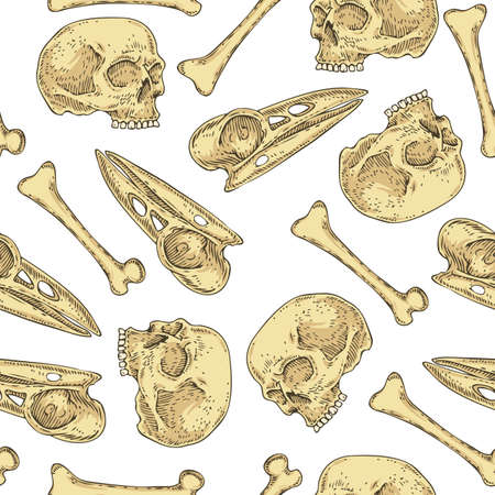 Seamless Pattern with Skulls and Bones Vettoriali