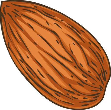 Shelled Almond Isolated on a White Background Ilustração