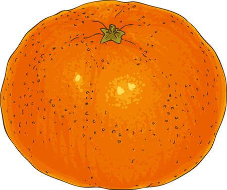 Ripe Whole Orange Tangerine on a White Background