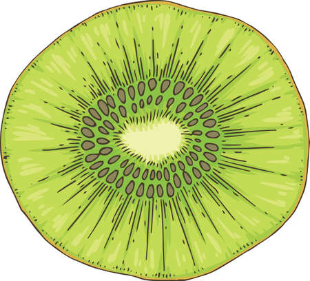 Ripe Kiwi Fruit Slice Isolated on a White Background