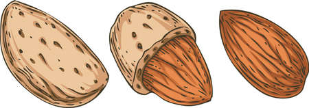 Shelled and Unshelled Almond 向量圖像