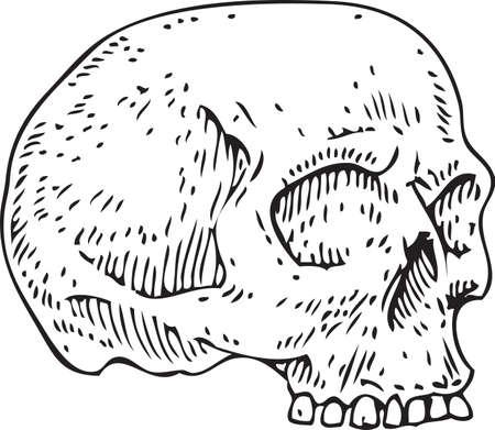 Vector Voodoo Skull 版權商用圖片 - 135392696