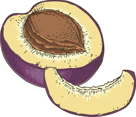 Ripe Plum. Slice and Cross Section