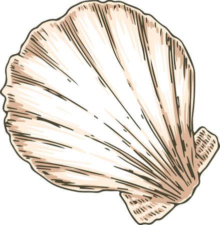 Bivalvia Seashell Иллюстрация