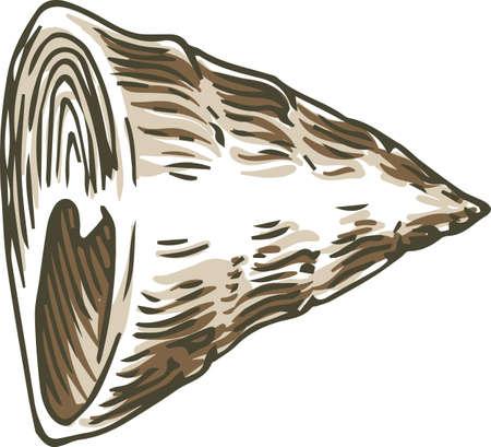 Conus Shell