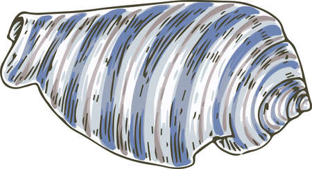 Striped Blue and White Shell