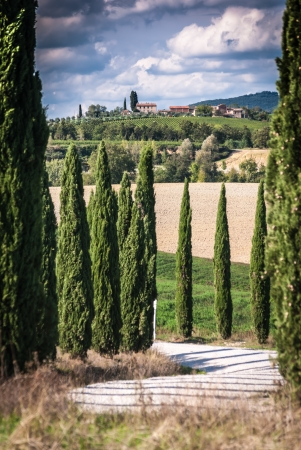 orte: Tuscany landscape with road and cypress alley  Stock Photo