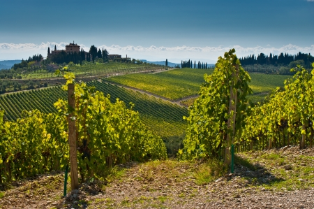 Tuscany landscape with wine yard in foreground  Stock Photo