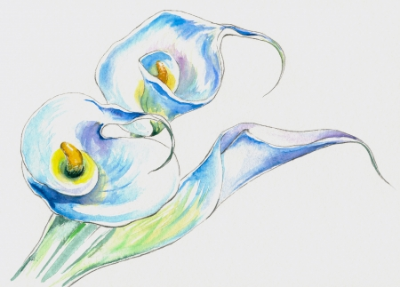 White calla lilies watercolor painted  photo