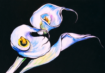 White calla lilies on a black background watercolor painted  photo