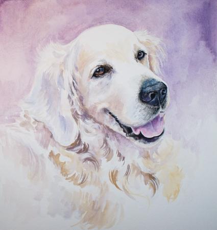 Portrait of golden retriever watercolors painted