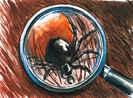 borreliosis: Close up of dog tick on the fur Picture  created with watercolors  Stock Photo