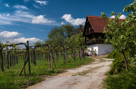 wine road: Landscape with wine yard,road and house in summer Styria,Austria