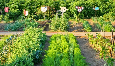 people in a row: Many different vegetables in the school garden
