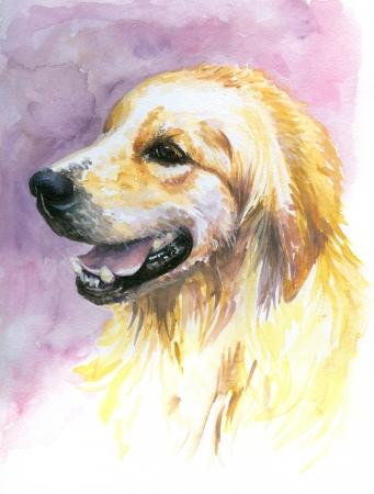 Retrato de la dulce, joven labrador acuarela pintada Foto de archivo