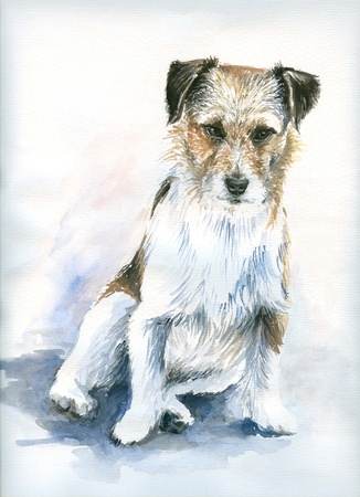 Watercolors painted portrait of jack russell terrier  photo