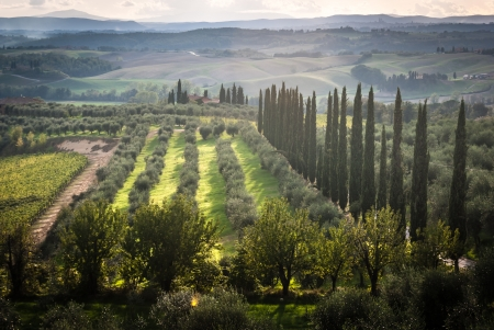 Panoramic view of scenic Tuscany landscape with vineyard in the Chianti region, Tuscany, Italy Stock Photo - 20271874