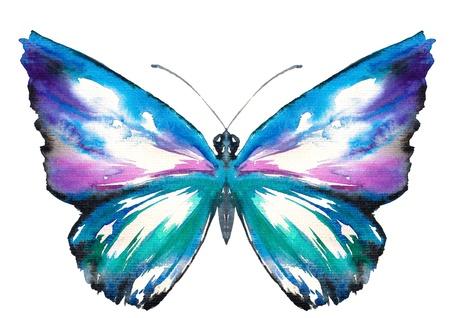 mariposa azul: Acuarela colorida mariposa pintada aislada en el fondo blanco Foto de archivo
