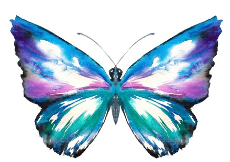 purple butterfly: Colorful butterfly watercolor painted isolated on white background Stock Photo