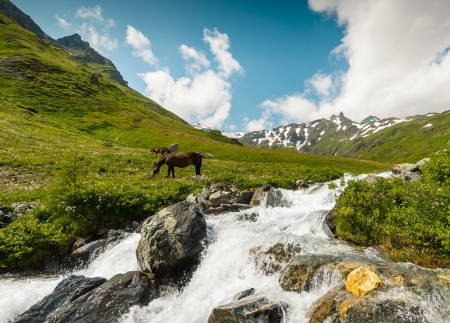 tauern: Horses on a meadow in mountains Hohe Tauern National Park, Austria   Stock Photo