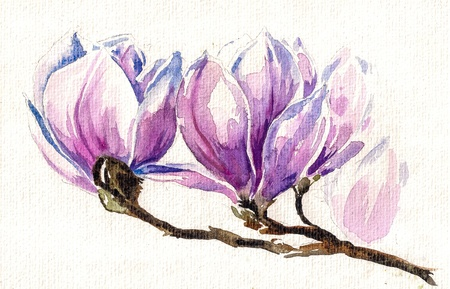 magnolia tree: Magnolia blossom on branch Picture  created with watercolors  Stock Photo