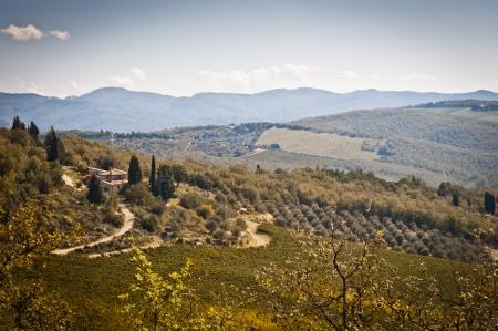 Tuscany landscape with vineyard in the Chianti region, Tuscany, Italy Stock Photo - 22696475