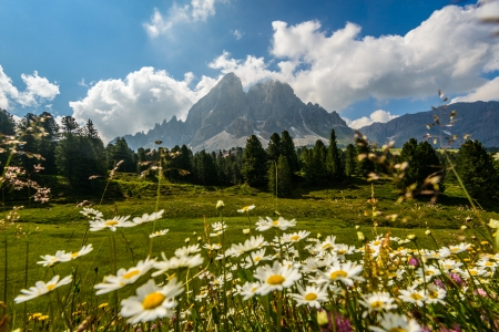 Italy Dolomites mountain at summer with beautifil flowers in foreground Dolomites