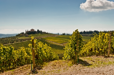View of scenic Tuscany landscape with vineyard in the Chianti region, Tuscany, Italy
