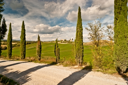 View of scenic Tuscany landscape with road and cypress alley, Chianti region, Tuscany, Italy
