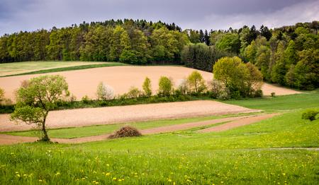 fields and meadows: Paisaje de primavera con los campos, prados y bosques Foto de archivo