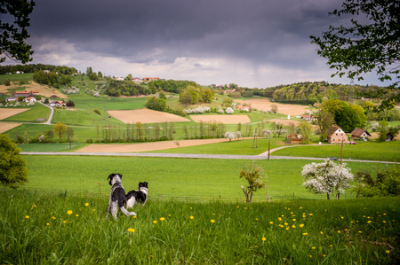 Spring landscape with sky before rain,fields, meadows and forest  photo