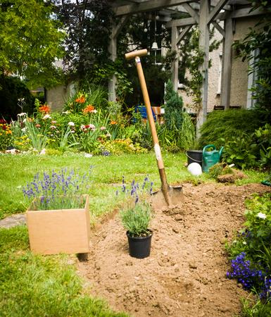 植栽の庭ラベンダー準備を作業します。 写真素材