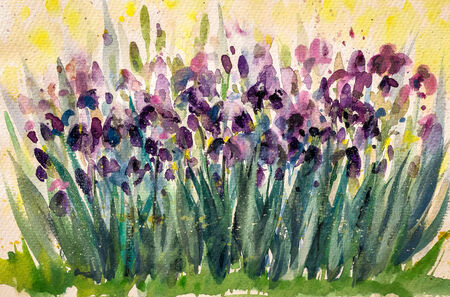 Violet iris flowers in garden Picture created with watercolors  photo